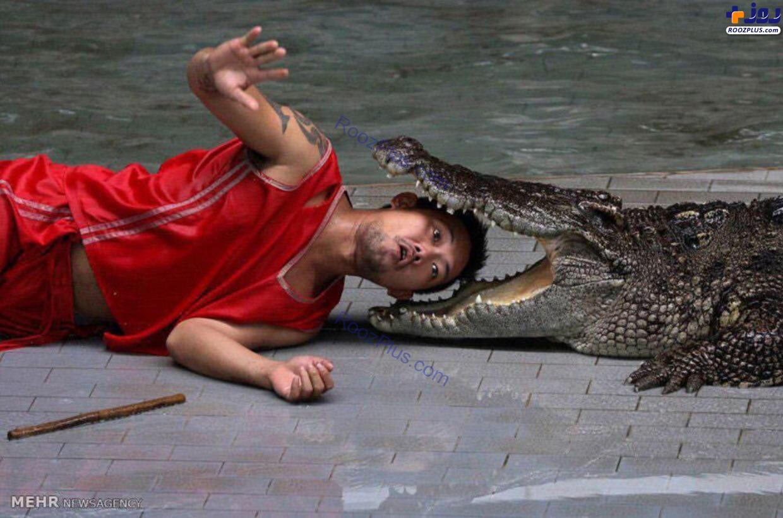 بازی خطرناک یک مرد با کروکودیل+عکس
