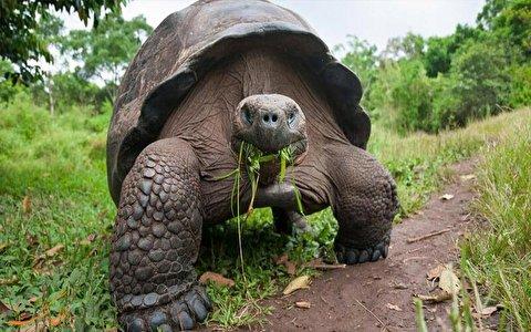 عاقبت بوسیدن لاکپشت
