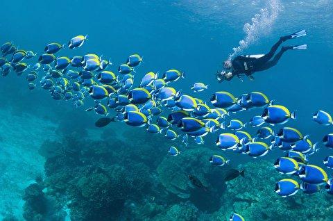 جریان زندگی به شکلی خارق العاده در اعماق دریا