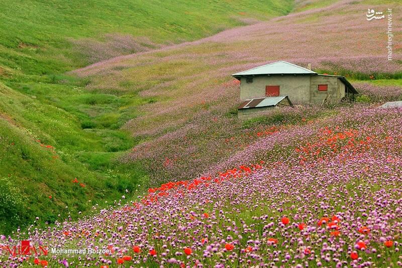 بهشت طبیعت جاده اسالم-خلخال+عکس