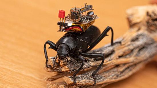 دوربینی که دنیا را از دید سوسکها نشان میدهد!