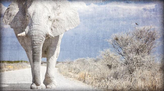 تئوری فیل سفید چیست؟
