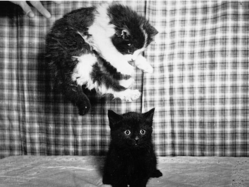 تصاویر بامزه از گربه های دوست داشتنی که در بهترین لحظه شکار شده اند