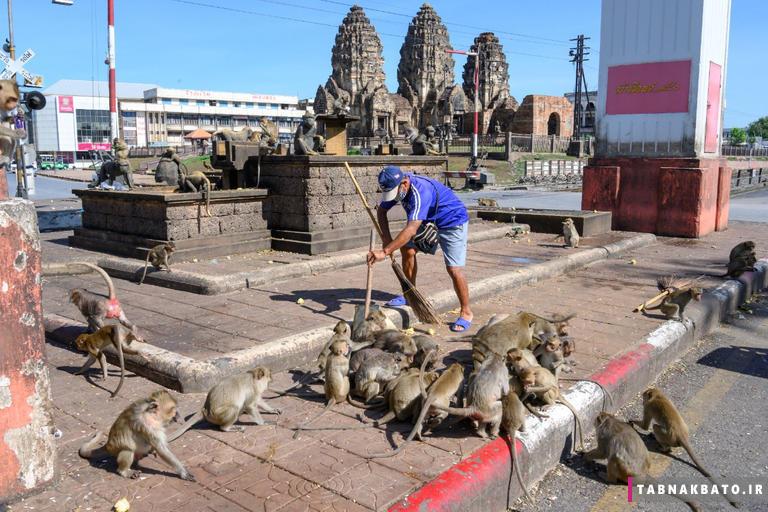 باجدهی مردم لیپوری تایلند به میمونها به روایت عکسهای جالب