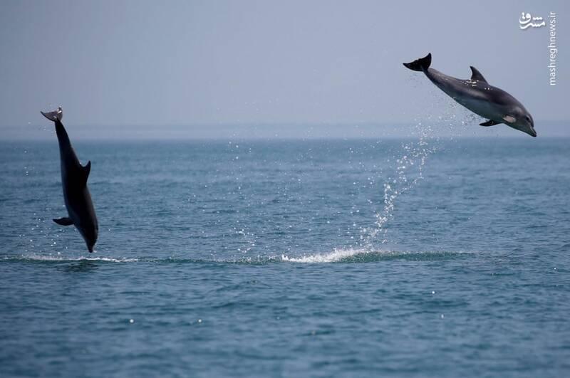 عکسی جالب از پرش دو متری یک دلفین