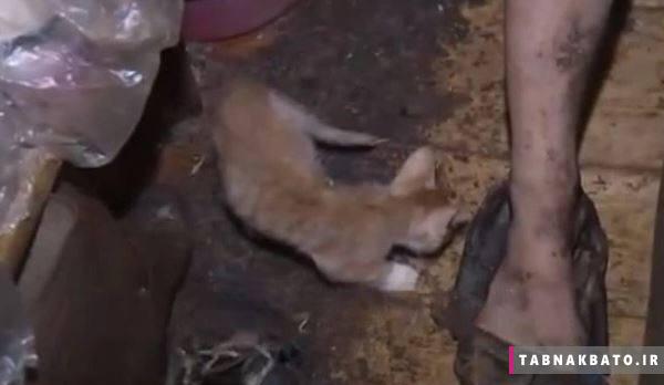 نجات دختر روس از زندگی گربهای