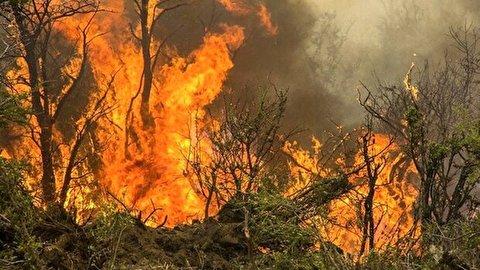 صدای دردناک ضجه حیوانات گرفتار در آتش