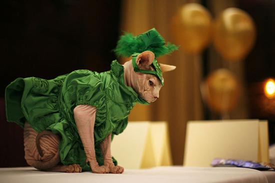 گربههایی که لباس میپوشند!