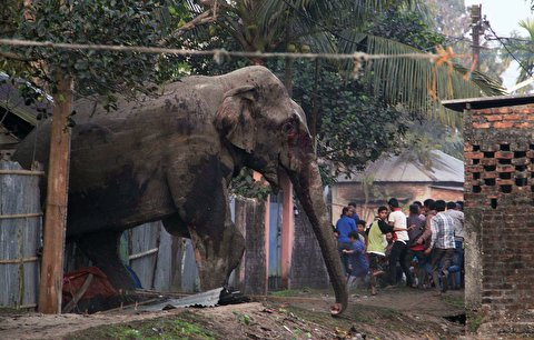 حمله فیل خشمگین به خانههای اهالی یک روستا
