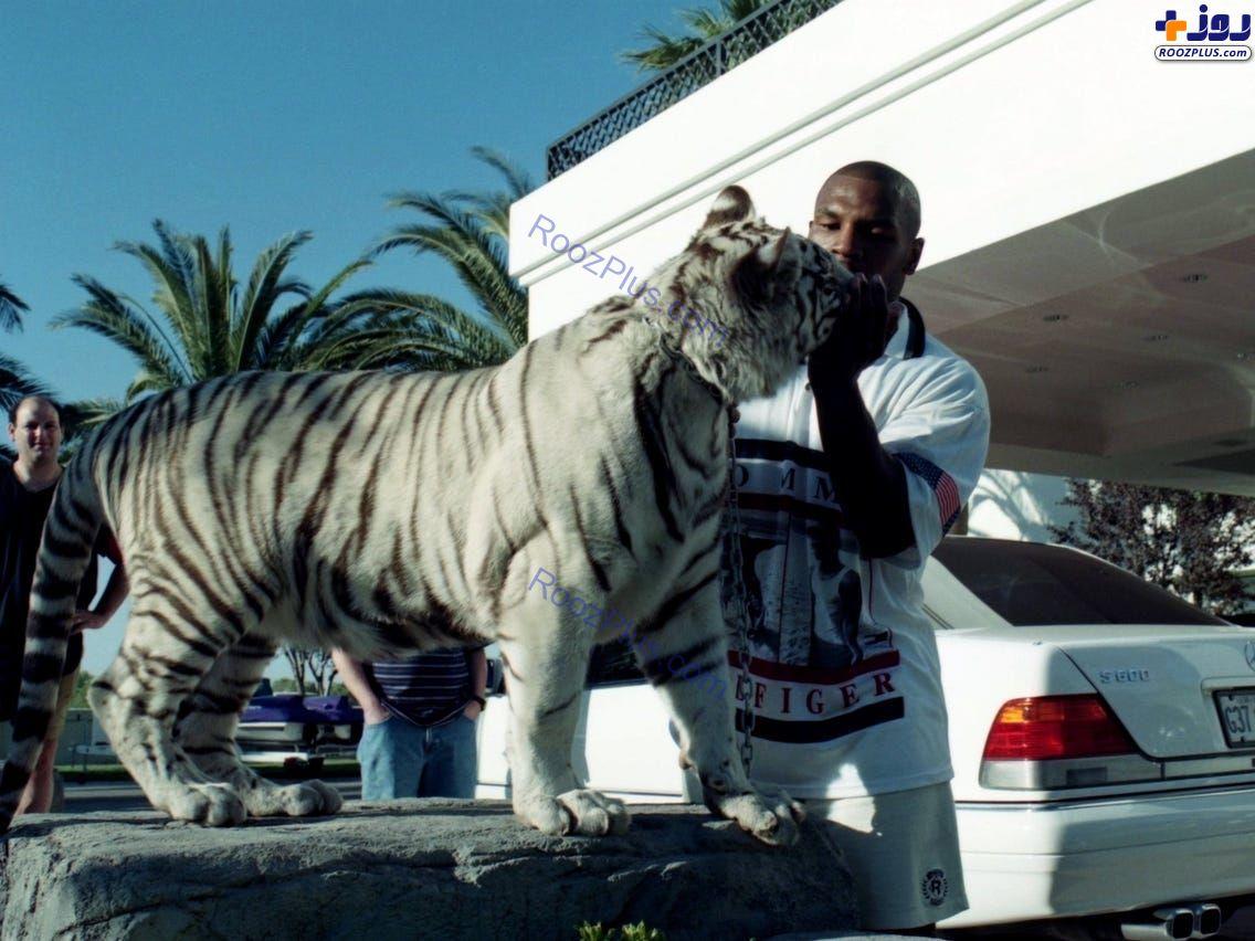 ببر ترسناک؛ حیوان خانگی ورزشکار معروف+عکس