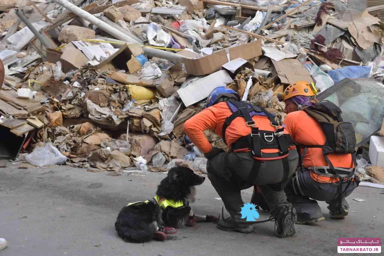 سگ تیم شیلی در خرابههای بیروت، نمادی از امید