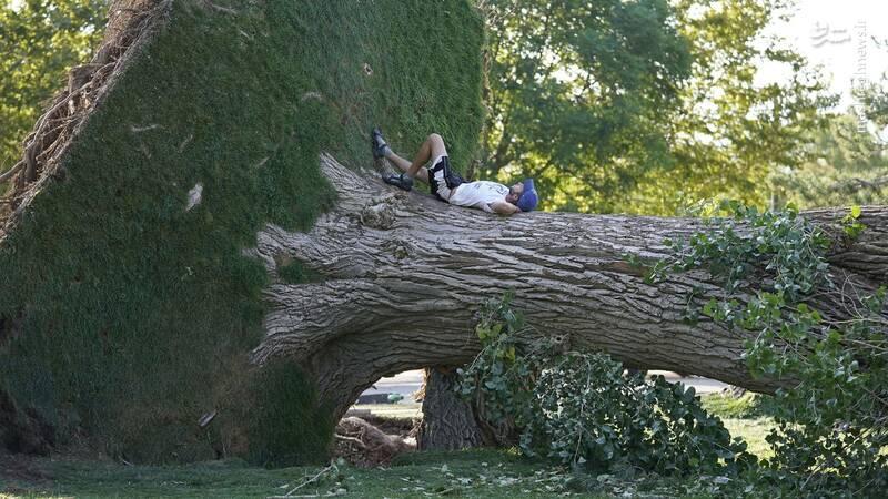 طوفان یک درخت را از ریشه درآورد+عکس