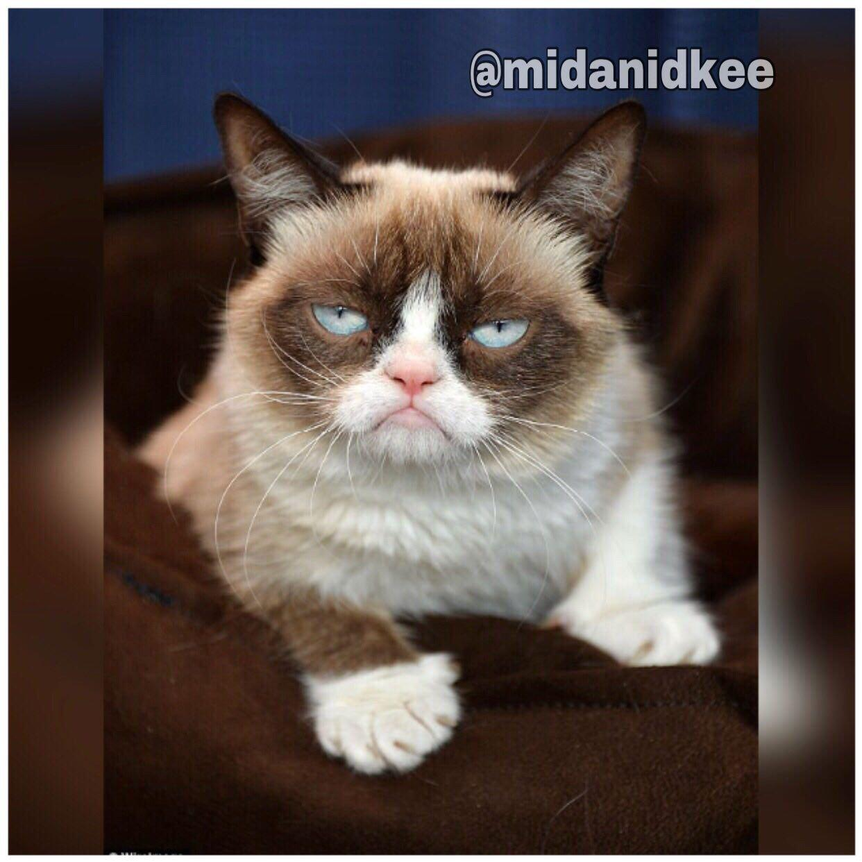 این گربه اخمو، مولتی میلیونرست+عکس