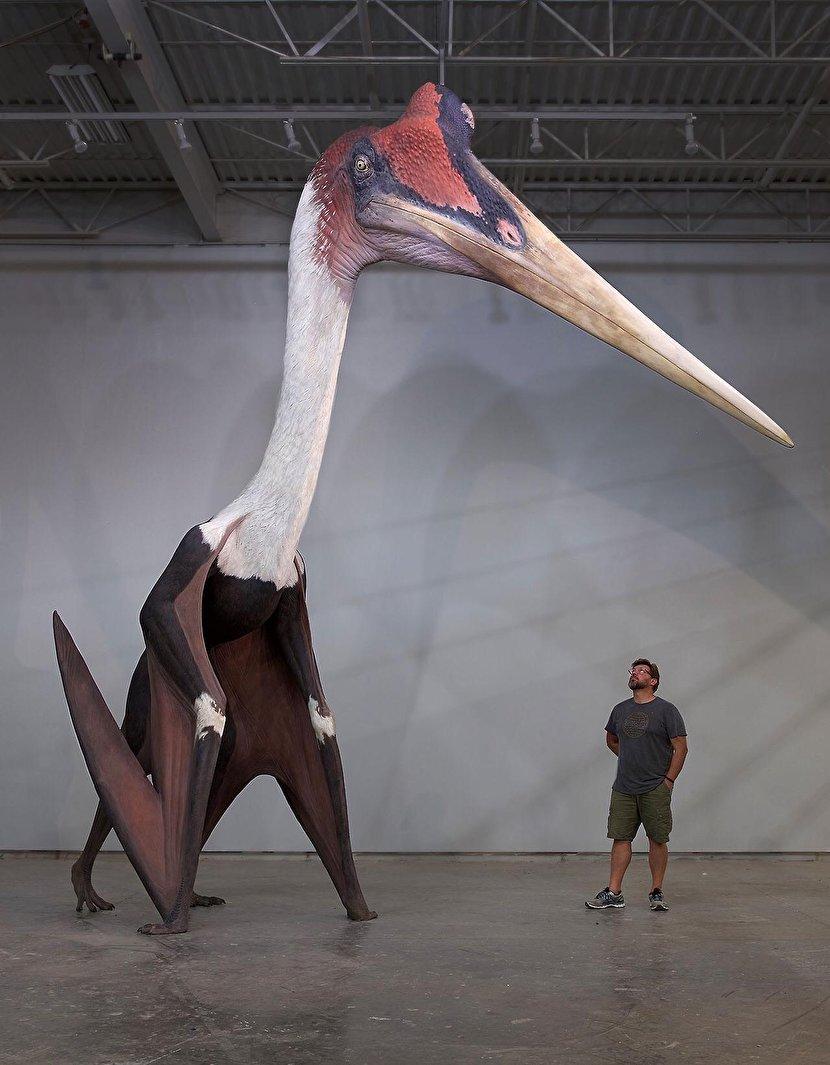 بزرگترین پرنده تاریخ با طول ۳ متر+عکس