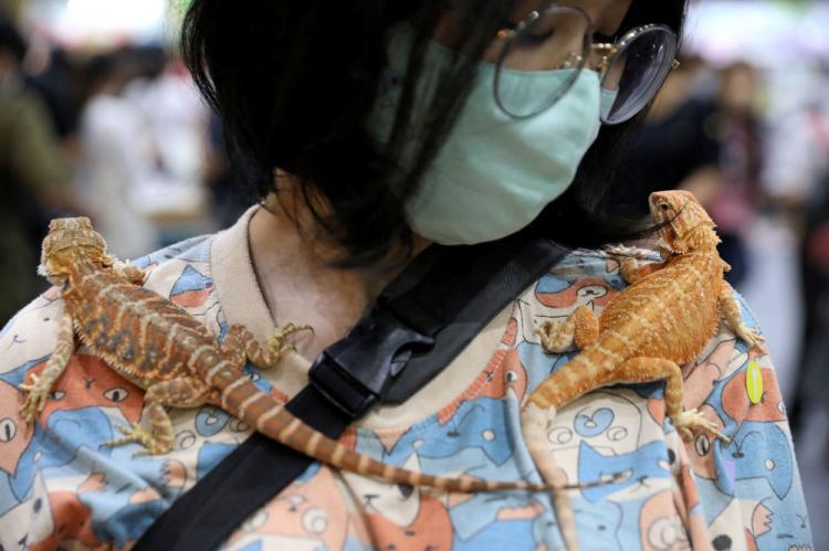 نمایشگاه حیوانات خانگی در بانکوک