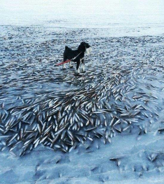 عکس دردناک از ساحل نروژ