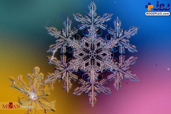 دانههای برف زیر میکروسکوپ +عکس