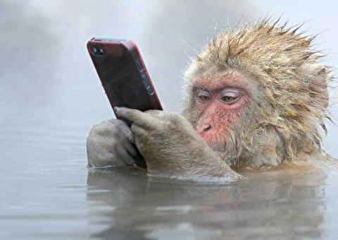دزدیده شدن موبایل دانش آموزی توسط میمون و ثبت تصاویر عجیب