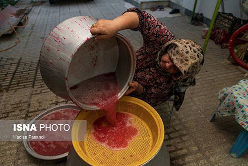 برداشت و پخت رب انار در باغات دهستان یساقی