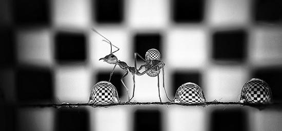 تصاویر باورنکردنی از مورچهها و قطرات آب