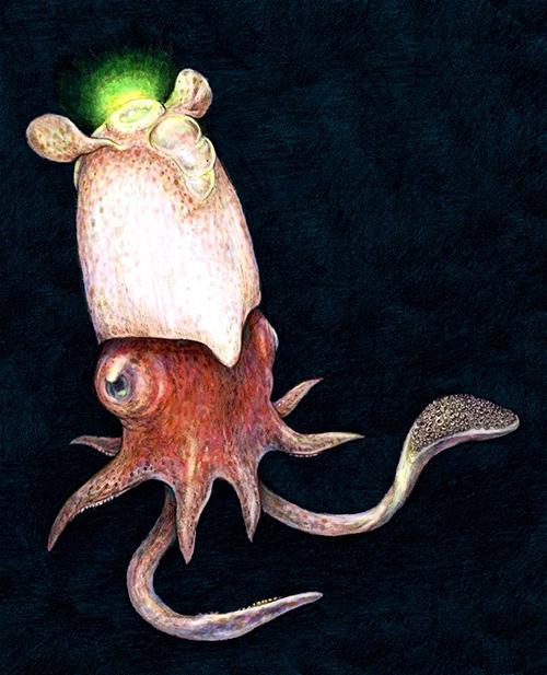 کشف ماهی مرکب نادری که تمام دانستهها و پیشفرضهای دانشمندان را برهم زد و آنها را شوکه کرد