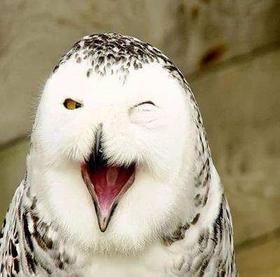 تصاویری جالب از خندهی حیوانات