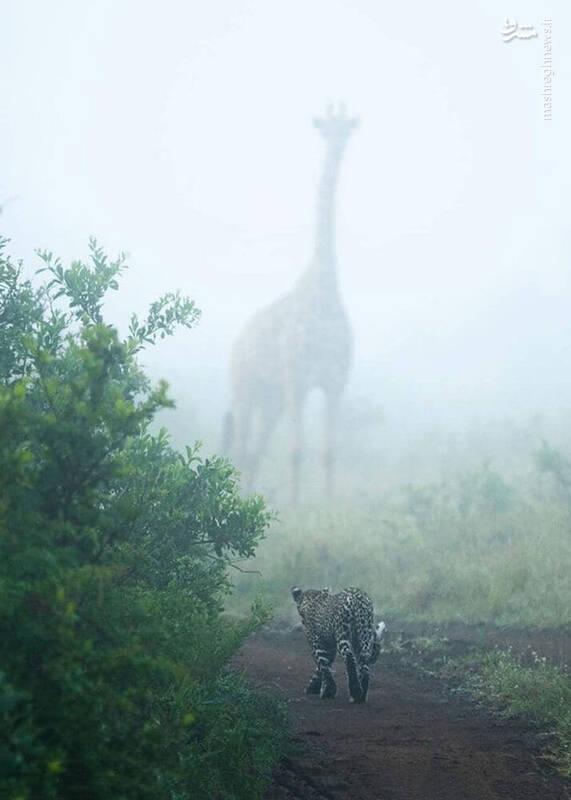 تصویری بینظیر از حیات وحش آفریقا