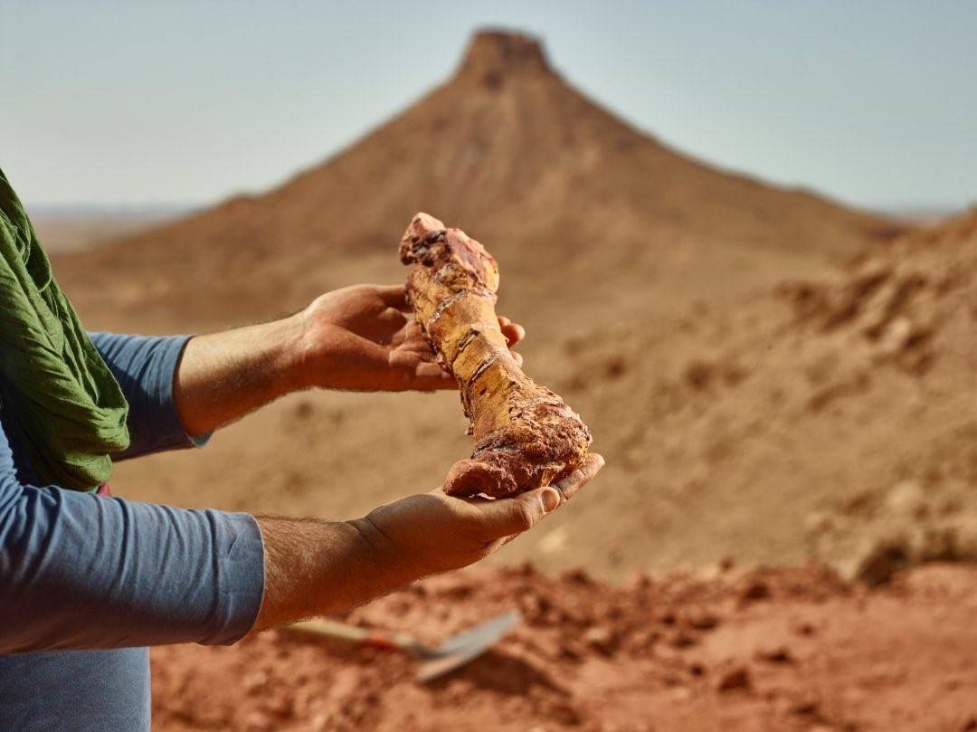 کشف یک استخوان پای دایناسور در مراکش +عکس