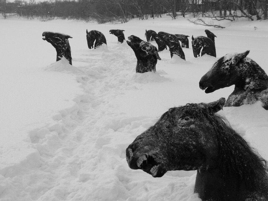 ماجرای شگفت انگیز اسبهایی که در رودخانه یخ زدند +عکس