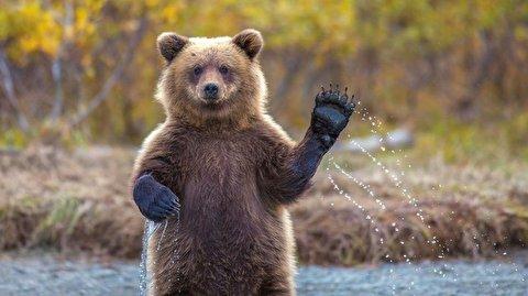 درخواست جالب خرسها برای غذا