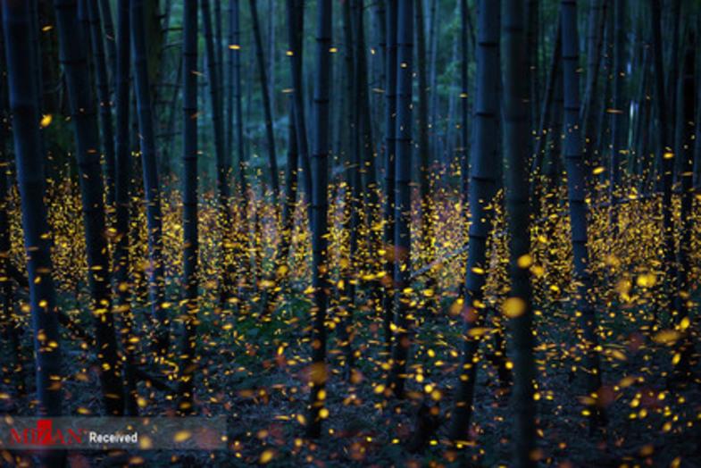 لامپهای طبیعت+ عکس