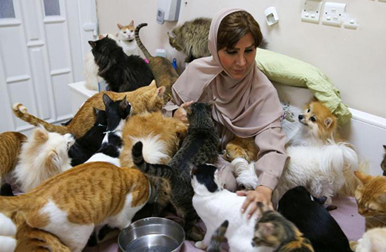 زنی که ۵۰۰ گربه و سگ در خانه دارد!