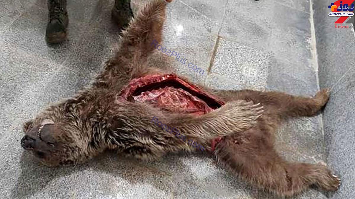 عکسی تکان دهنده از لاشه یک خرس در دنا