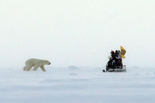 نزدیک شدن یک خرس قطبی به خودرو حامل یک تیم تحقیقی + عکس