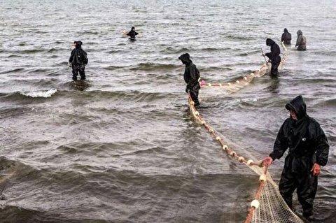 صید ماهی ۵۰۰ کیلویی در مازندران!