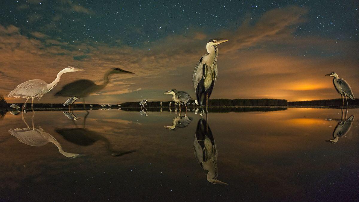 درخشش زیبای ستارگان در شب + عکس