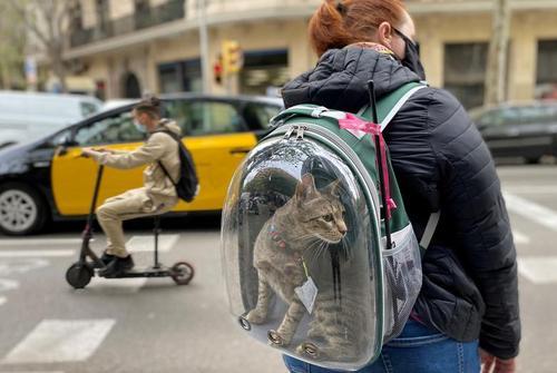 حمل عجیب گربه خانگی در بارسلونا + عکس