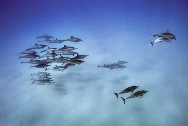 حرکت جالب دلفینهای فرفره + عکس