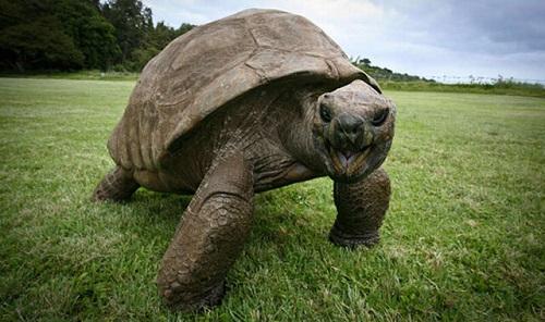لاکپشت ۱۸۸ساله؛ پیرترین حیوان روی خشکی