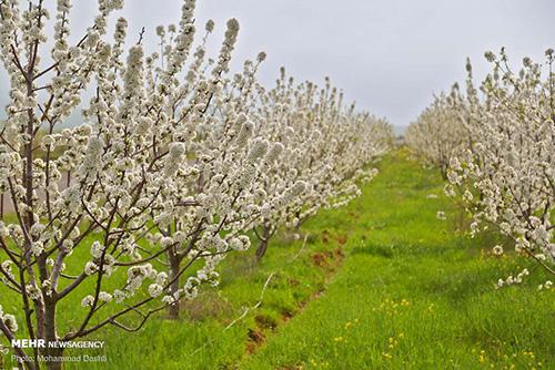بهشت «اردبیل» در قاب بهار