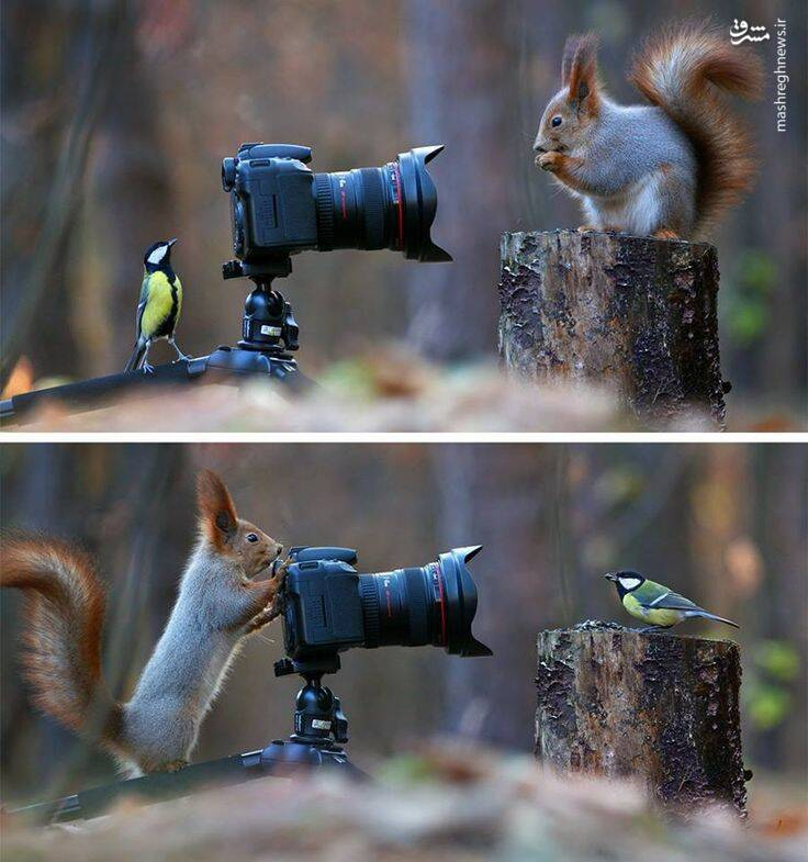 عکاسی سنجاب و یک پرنده