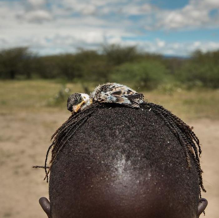 روش عجیب شکار پرنده در تانزانیا + عکس