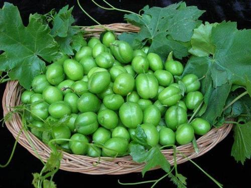کسانی که نباید به گوجه سبز لب بزنند