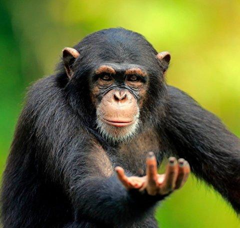 حمله ناگهانی و زورگیری جالب میمون در قفس