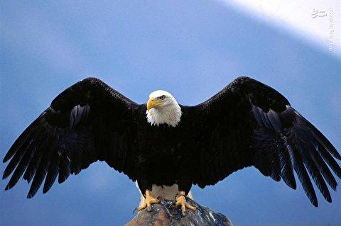 حمله وحشتناک یک عقاب به دختربچه