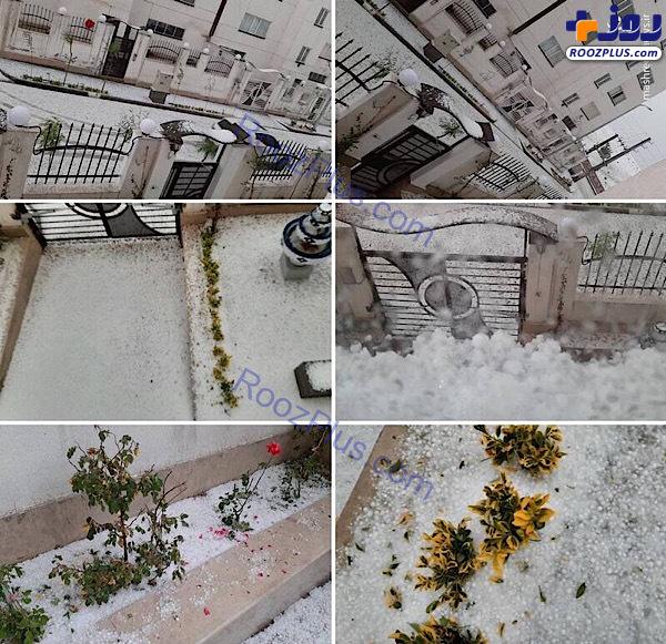 سفیدپوش شدن فاز ٨ پردیس تهران +عکس