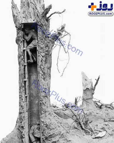 درخت مخصوص دیدهبانی در جنگ جهانی اول+عکس