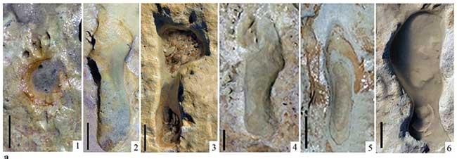 کشف رد پا فسیلشده ۱۰۰هزار ساله در اسپانیا