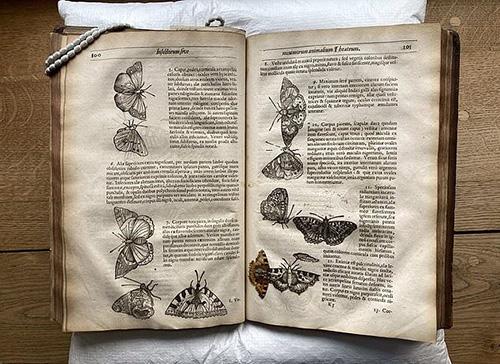کشف یک پروانه ۴۰۰ساله در میان کتابی قدیمی+عکس
