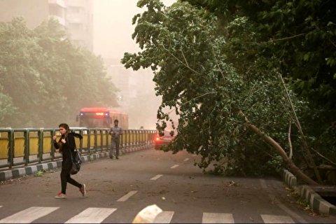 لحظه کنده شدن درخت در اثر باد شدید در یزد